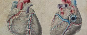 Tavola anatomica del cuore